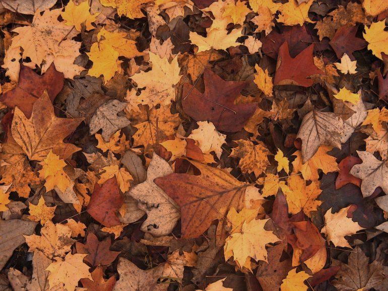 Los inicios de otoño…